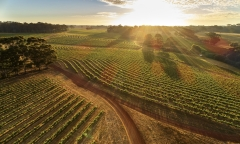 Leeuwin's Vineyard at Sunrise