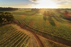 Leeuwin's Vineyard at Sunrise